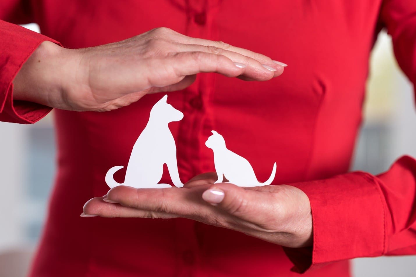How to Choose the Best Pet Insurance